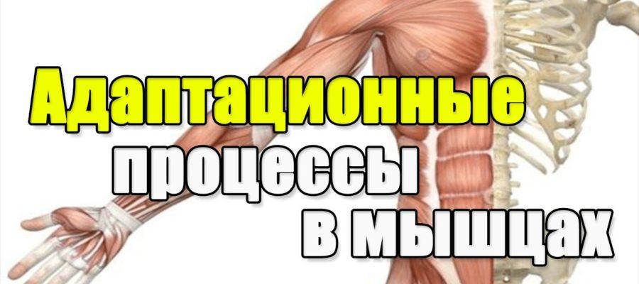 Процессы в мышцах
